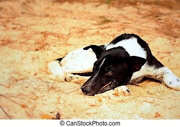 Dog sleeping on the desert