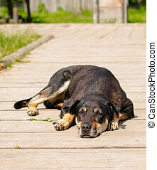 Dog sleeping on the wooden surface.