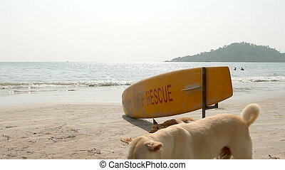 Dog sleeping under Surf Rescue surfboard on the Palolem...