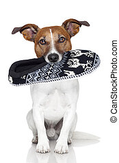 dog slipper mouth - dog wool slipper in mouth