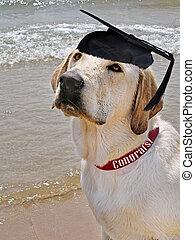dog, smart