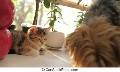 dog sniffing cat sitting on window sunlight a pets slow motion video. dog and cat pets funny concept