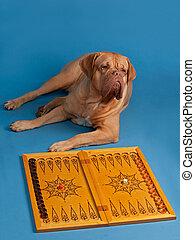 dog, spelend backgammon