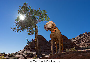 dog standing beside tree outdoors