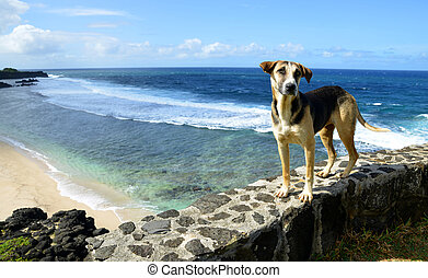 Dog standing by the beach Gris Gris on South of Mauritius island.