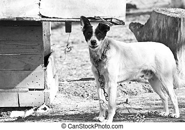Dog standing in front of dog house