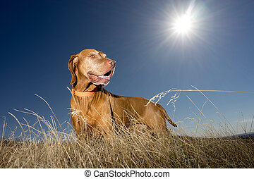 dog standing in grass with sun in the background