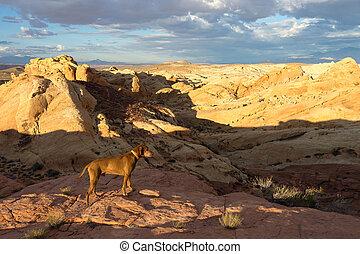 dog standing in he desert
