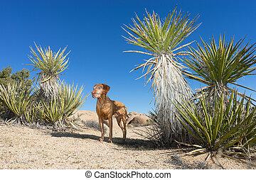 dog standing in the desert