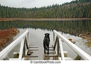 Dog standing near lake