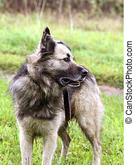 Dog standing on a green grass