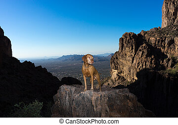 dog standing on cliff in the superstition mounains arizona