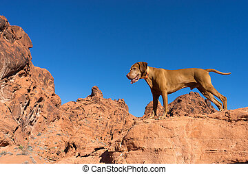 dog standing on red clff outdoors