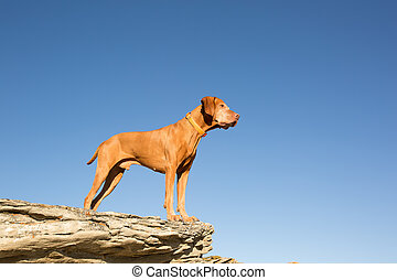 dog standing on rock with blue sky in background