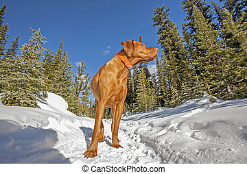 dog standing on the snowy trail in forest