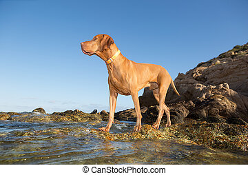 dog standing on water shore