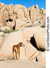dog standing outdoors with cliffs in background