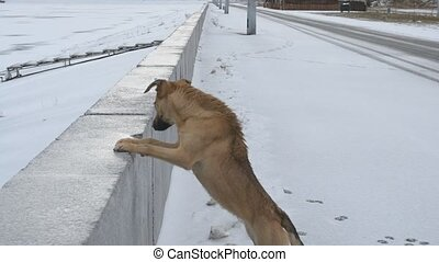 Dog standing with front paws on concrete parapet of a frozen water storage reservoir