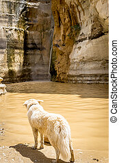 dog staring at a waterfall in the desert