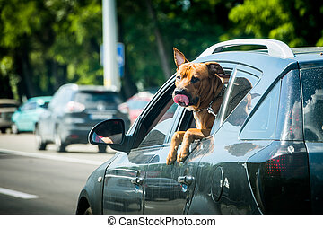Dog sticking his head out of a car window