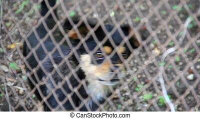 Dog - Pet behind the grid
