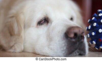dog - fauna