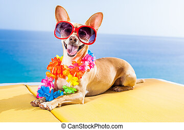 chihuahua dog under the shadow of a palm tree relaxing and resting in summer vacation holidays