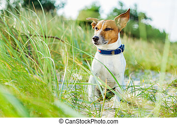 dog sitting at the beach with grass as background