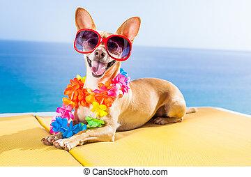 dog summer beach - chihuahua dog under the shadow of a palm...