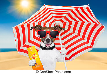 dog summer sunscreen - dog at the beach under red and white...