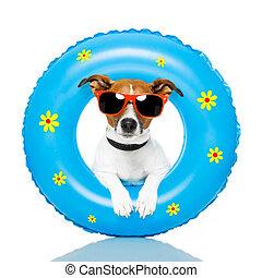 dog sunbathing with air mattress