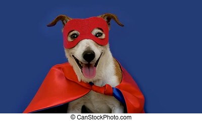 little jack russell wearing a red mask for carnival party