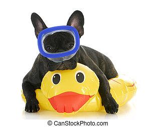 dog swimming - french bulldog wearing swimming mask laying...
