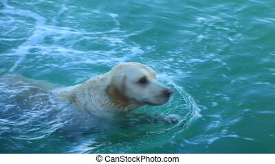 Dog swims in the sea