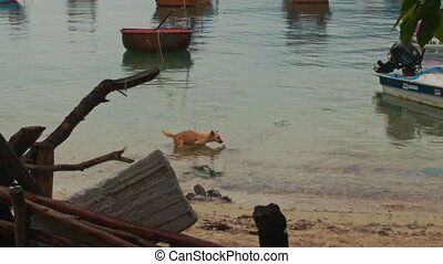 Dog Swims to Fishing Boat in Sea Bay Branch on Foreground