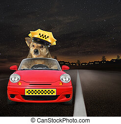Dog taxi driver at work 2