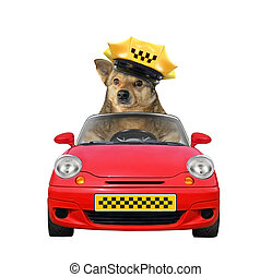 Dog taxi driver in a car