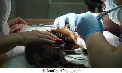 Dog teeth cleaning.