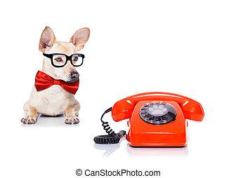 dog, telefoon