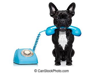 dog, telefoon, telefoon