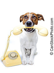 dog, telefoongesprek