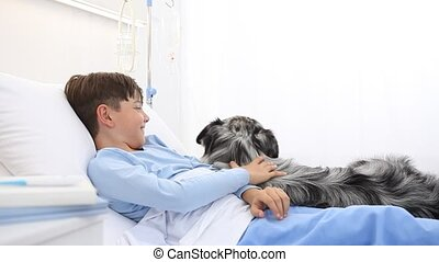 dog therapy, llonely and sick child lying in hospital bed is cheered by the happiness of the dog