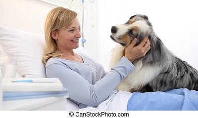 dog therapy, lonely and sick woman lying in hospital bed is cheered by the happiness of the dog