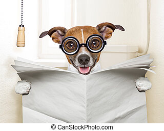 crazy silly dog sitting on toilet and reading magazine