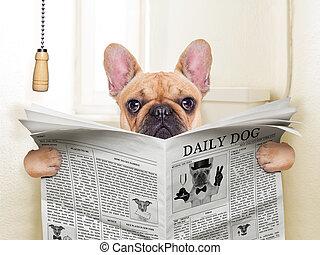 dog toilet - fawn french bulldog dog sitting on toilet and...