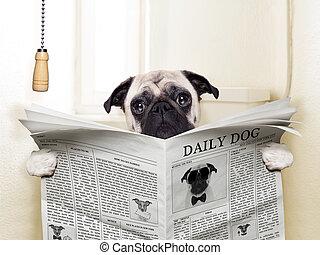 pug dog sitting on toilet and reading magazine having a break