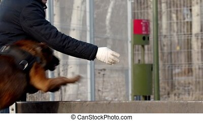 dog training - dog handler is instructing dog to jump over the barrier - outdoor