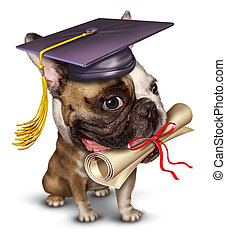 Dog training pet school concept with a bull dog wearing a graduation holding a diploma in his mouth as a symbol of animal obedience education and veterinary guidance in a dynamic forced perspective on a white background.