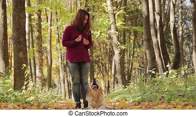 Dog training. Girl playing with golden retriever dog in the...