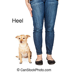 Dog Training Heel Command - A person giving a hand signal to...